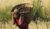 Photo of Nepali Woman Working in Field v2