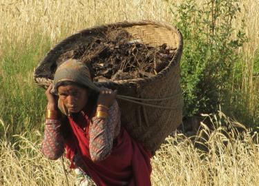 Photo of Nepali Woman Working in Field v2