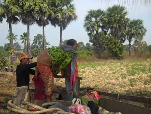 Blindness in Cambodia